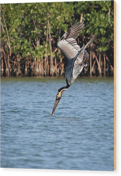 Pelican Dive Wood Print