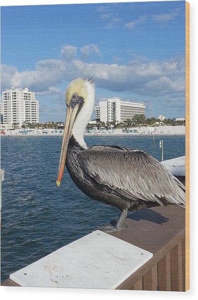 Pelican -florida Wood Print