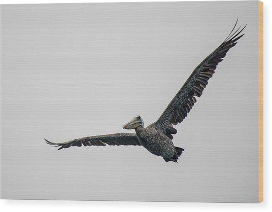 Pelican In Flight Wood Print