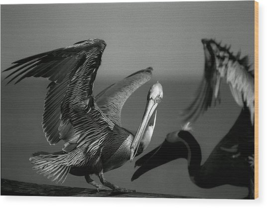 Wood Print featuring the photograph Pelican by Jane Melgaard