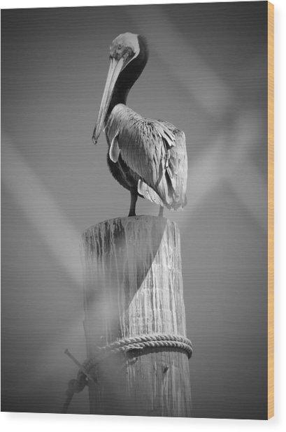 Pelican Perched Wood Print by Megan Verzoni