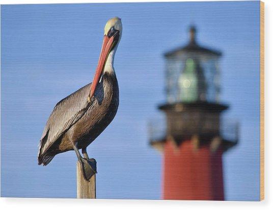 Pelican Perched Under Jupiter Lighthouse, Florida Wood Print