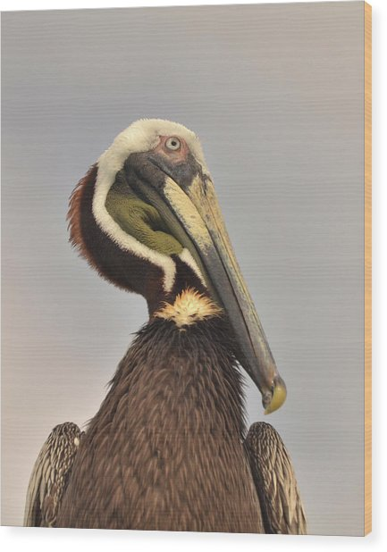 Pelican Portrait Wood Print