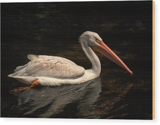 Pelican Swimming In Salisbury Wood Print