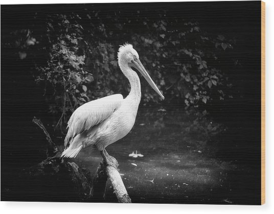 Wood Print featuring the photograph Pelican by Traven Milovich