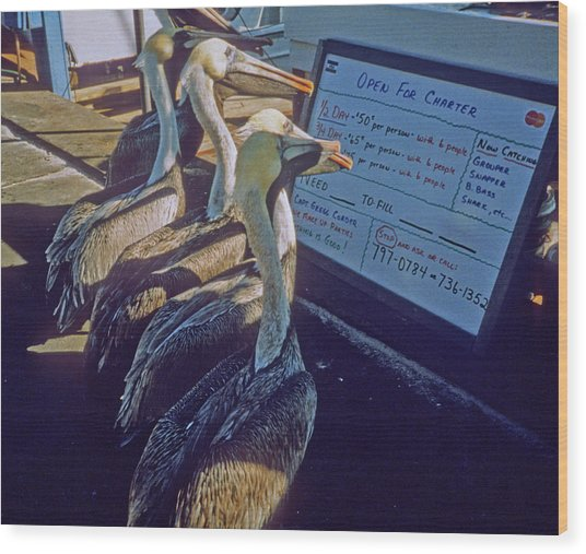 Pelicans And The Menu Wood Print