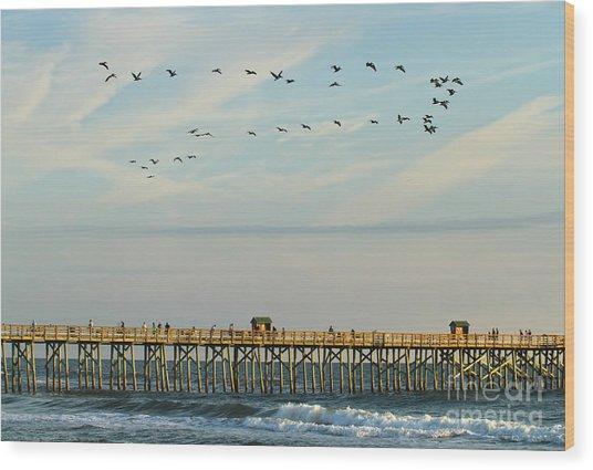 Pelicans At Flagler Beach Wood Print