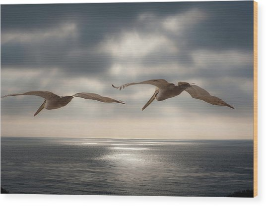 Pelicans At Sea Wood Print