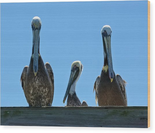 Wood Print featuring the photograph Pelicans At The Kure Beach Fishing Pier 2006 by Willard Killough III