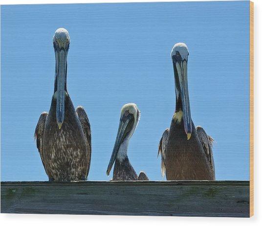Pelicans At The Kure Beach Fishing Pier 2006 Wood Print
