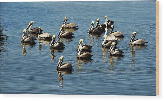 Pelicans Blue Wood Print