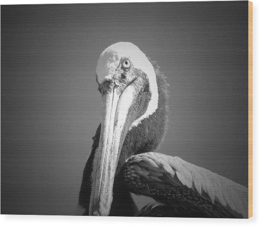 Pelican's Gaze Wood Print by Megan Verzoni