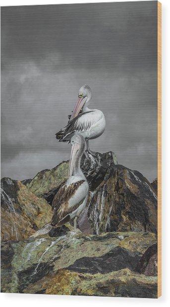 Pelicans On Rocks Wood Print