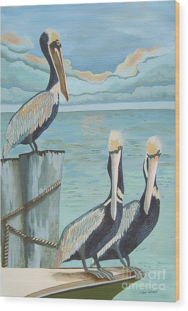 Pelicans Three Wood Print by Jennifer  Donald