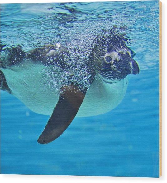 Penguin Dive Wood Print