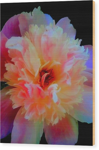 Peony Color Play Wood Print