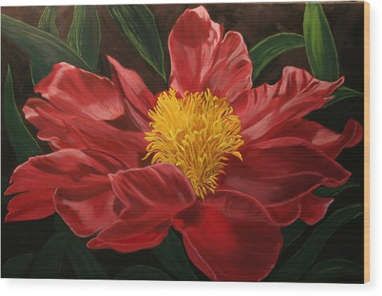 Peony Japonica Wood Print by Robert Tower