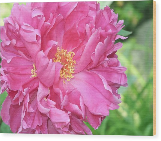 Wood Print featuring the photograph Peony Perfection by Lynda Lehmann