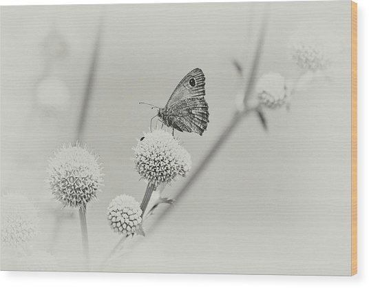 Perched Butterfly No. 255-2 Wood Print