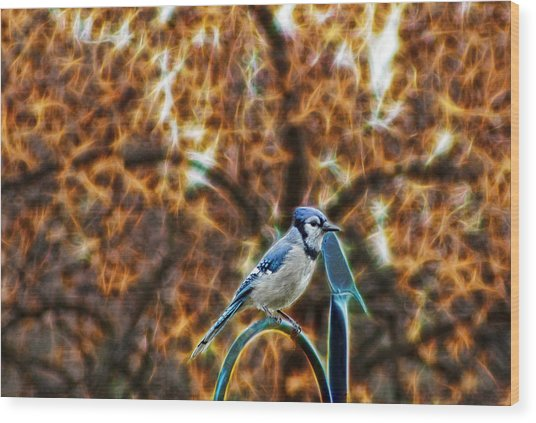 Perched Jay Wood Print