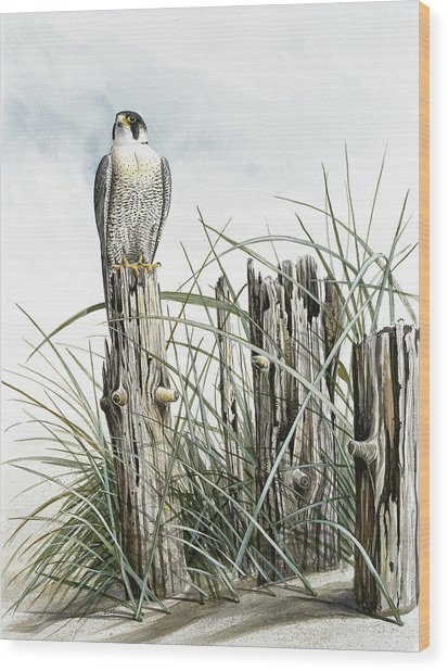 Peregrine Falcon On Post Wood Print by Dag Peterson
