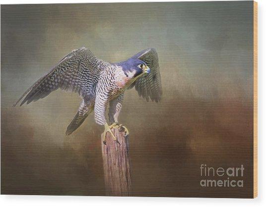 Peregrine Falcon Taking Flight Wood Print