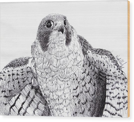 Peregrine Falcon Wood Print by Wade Clark