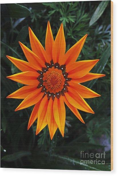 Perfect Flower  Wood Print