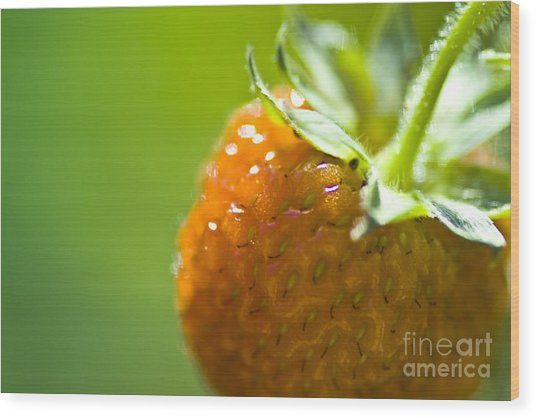 Perfect Fruit Of Summer Wood Print