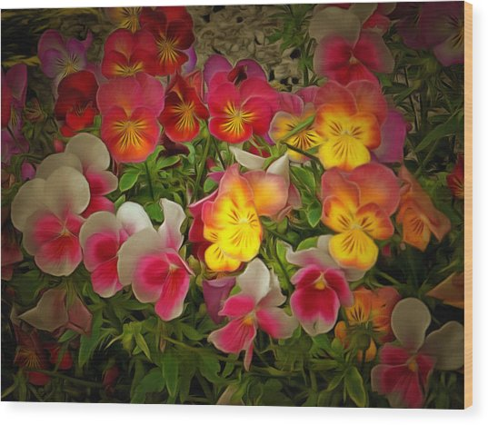 Radiance Pansies Wood Print