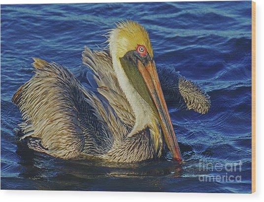 Perky Pelican II Wood Print