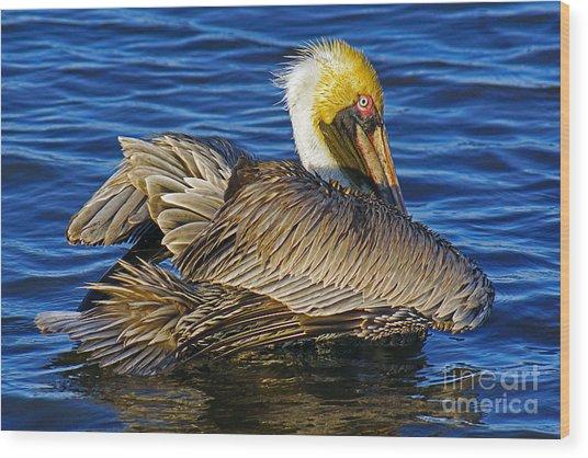 Perky Pelican Wood Print