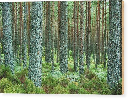 Perpetual Wood Print