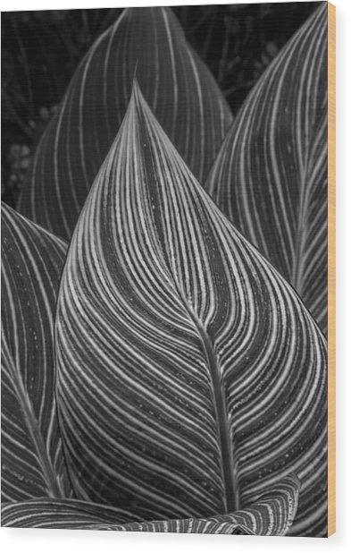 Perpetual Motion Wood Print