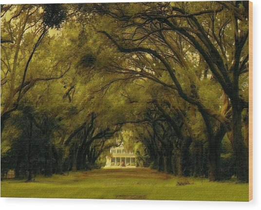 Perplexing Plantation Wood Print