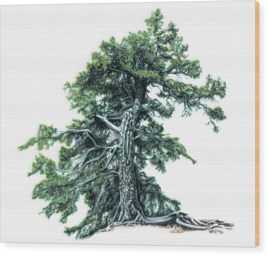 Perserverance Wood Print