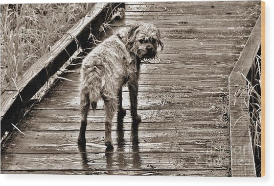 Pet Portrait - Puck Wood Print