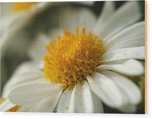Petals And Pollen Wood Print