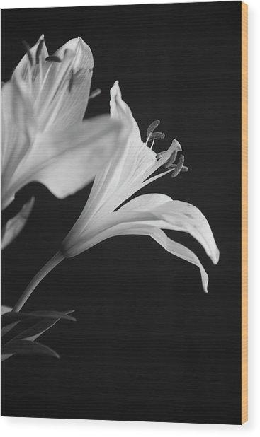 Petals' Light Wood Print
