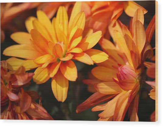 Petals Of Autumn 2 Wood Print by Jim  Darnall