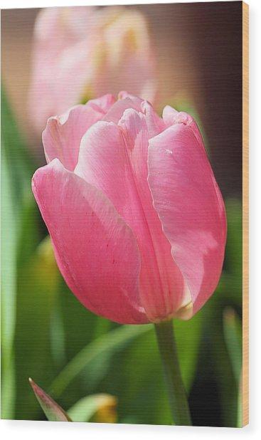 Petite Pink Wood Print