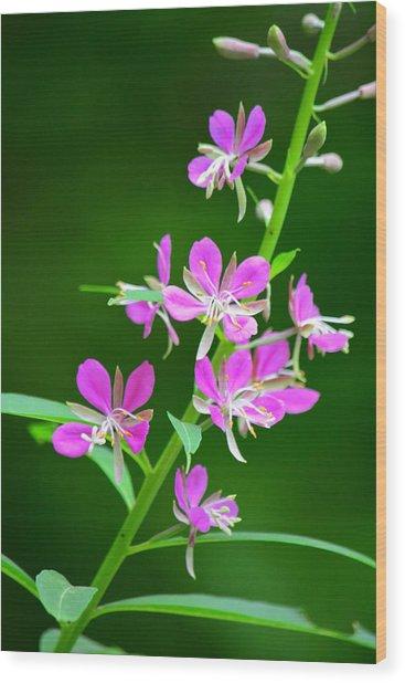 Petites Fleurs Violettes Wood Print