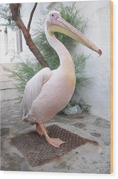 Petros The Pelican Wood Print