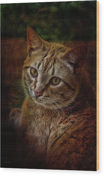 Pets Fat Cat Portrait 2 Wood Print