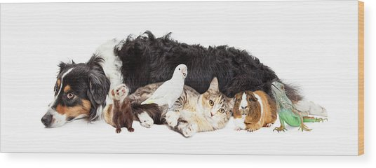 Pets Together On White Banner Wood Print by Susan Schmitz