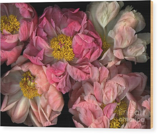 Petticoats Wood Print