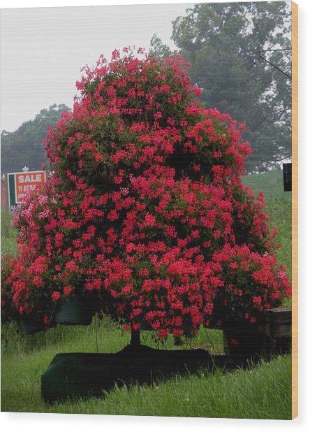 Petunia Tree Wood Print by Jeanette Oberholtzer