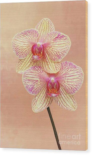 Phalaenopsis Moth Orchids #2 V2 Wood Print