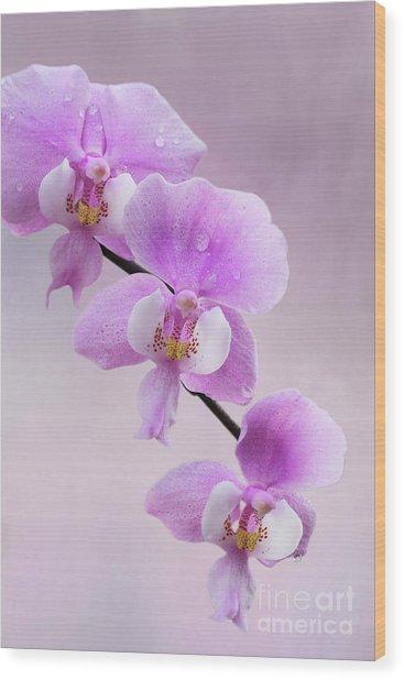 Phalaenopsis Schilleriana Fragrant Butterfly Orchid V2 Wood Print