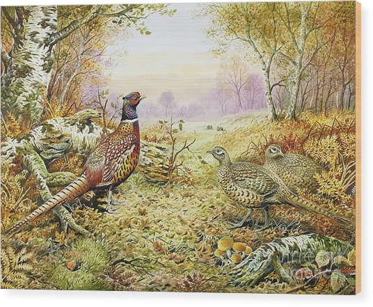 Pheasants In Woodland Wood Print